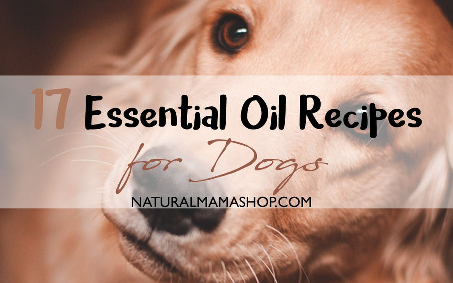 17 Essential Oil Recipes for Dogs | Natural Mama Shop
