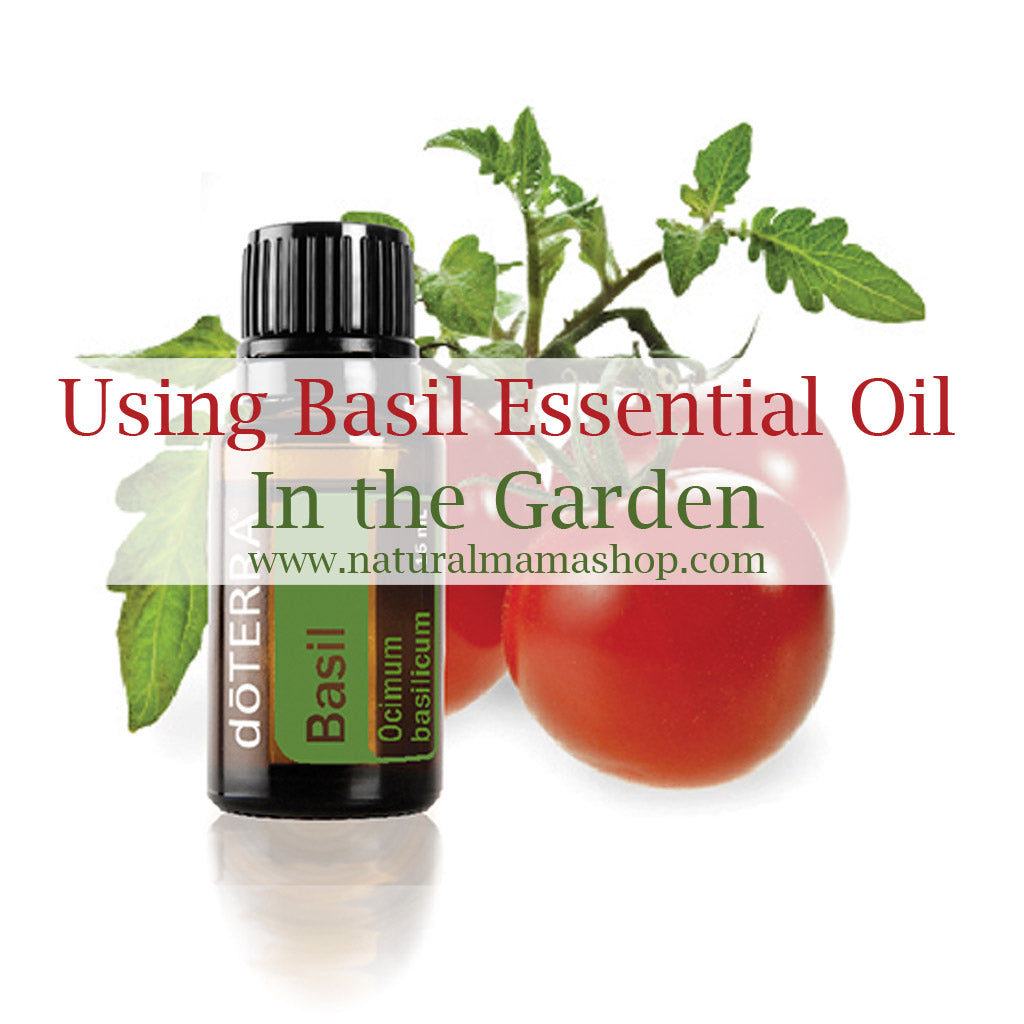 basil essential oil garden