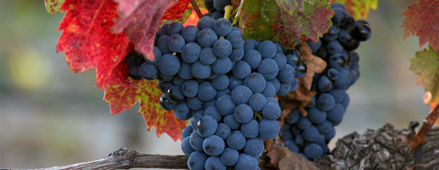 Syrah Spanish wines