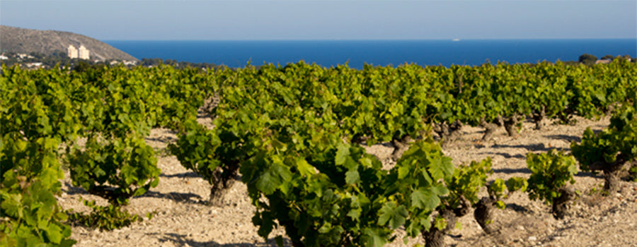 Wines from Valencia