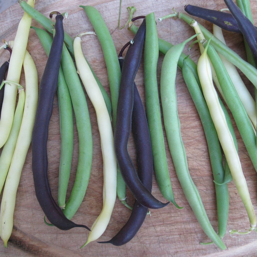 Snap Bush Bean Mix - Cactus en ligne