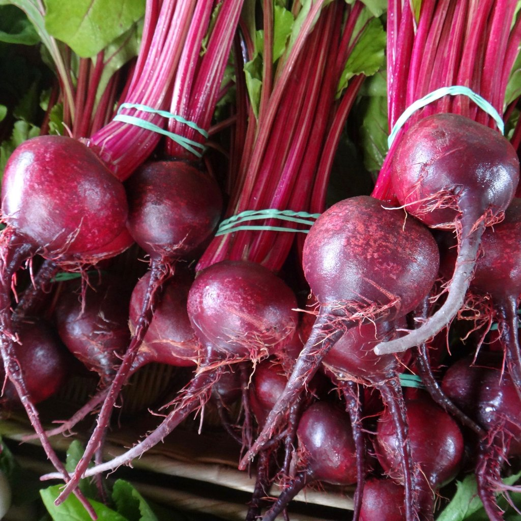 Detroit Dark Red Beet - Cactus en ligne