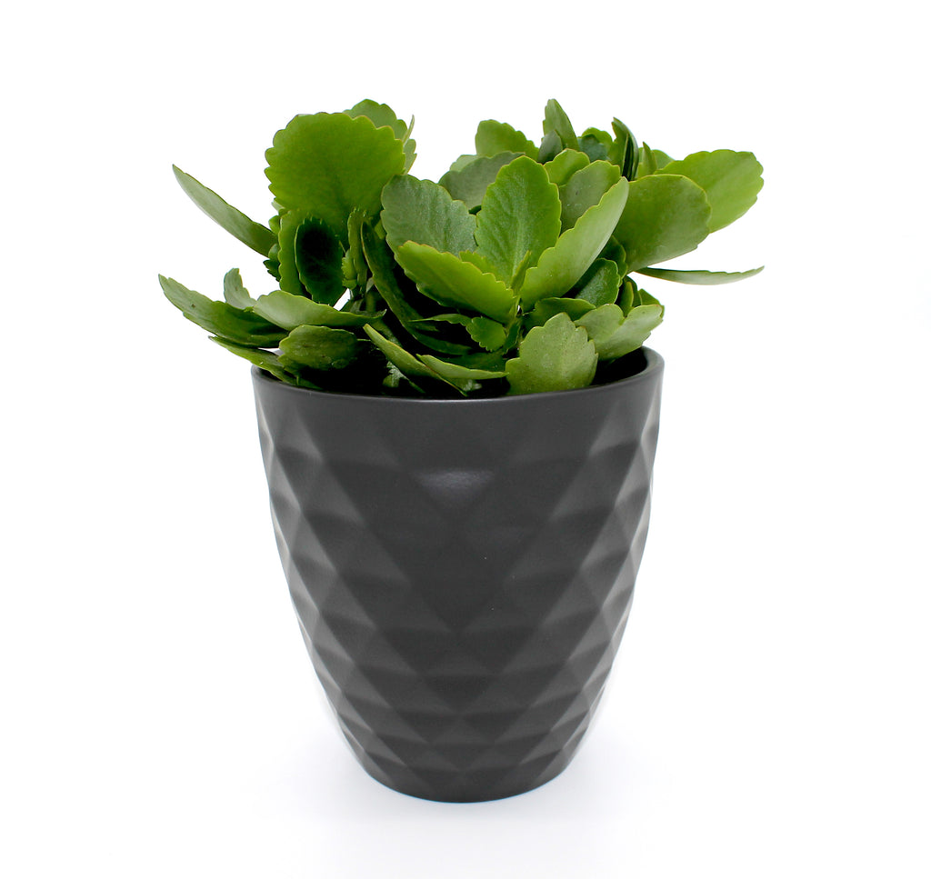 Anthrazit Black Planter 4''
