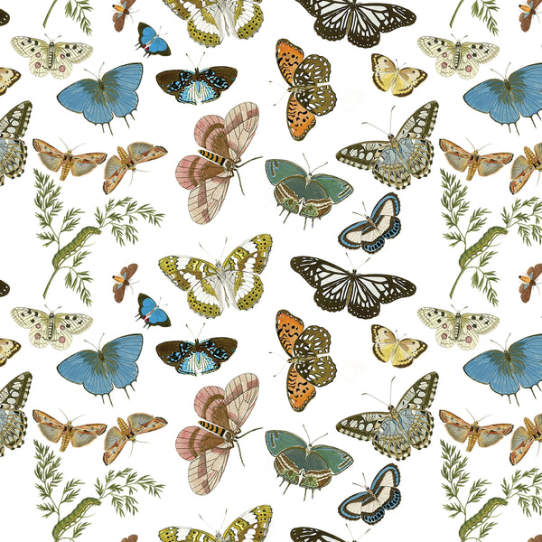 Gift Wrap ~ Butterflies and Moths