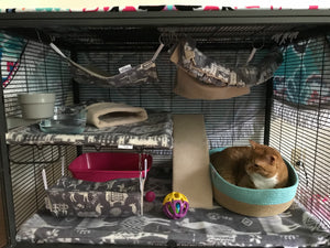 Setting Up a Critter Nation Cage