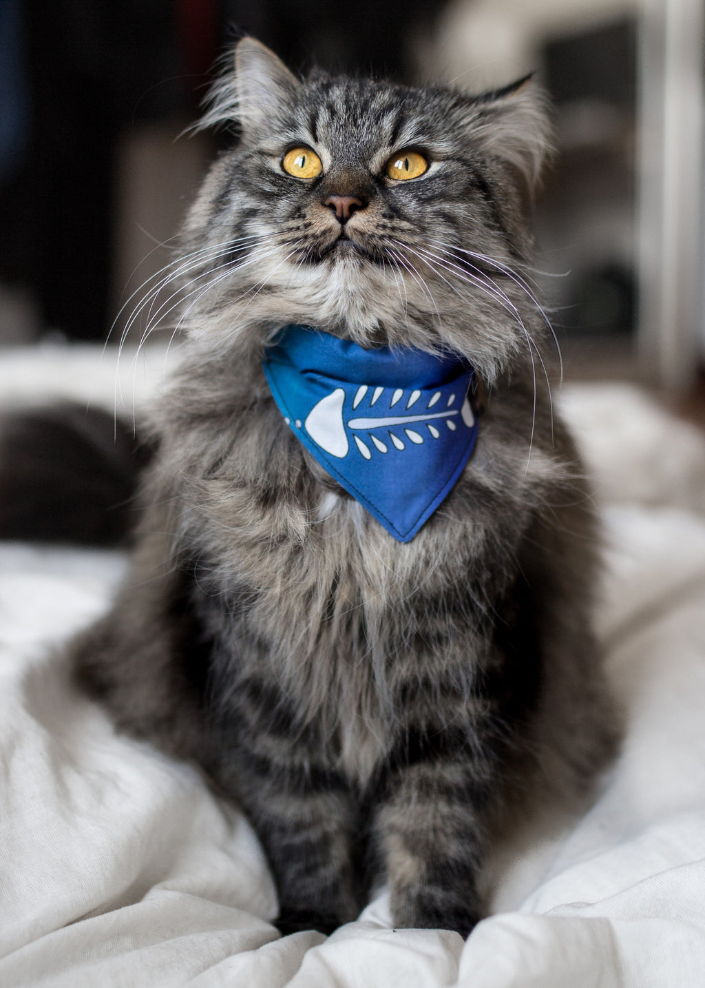 Mainecoon Cat Accessories