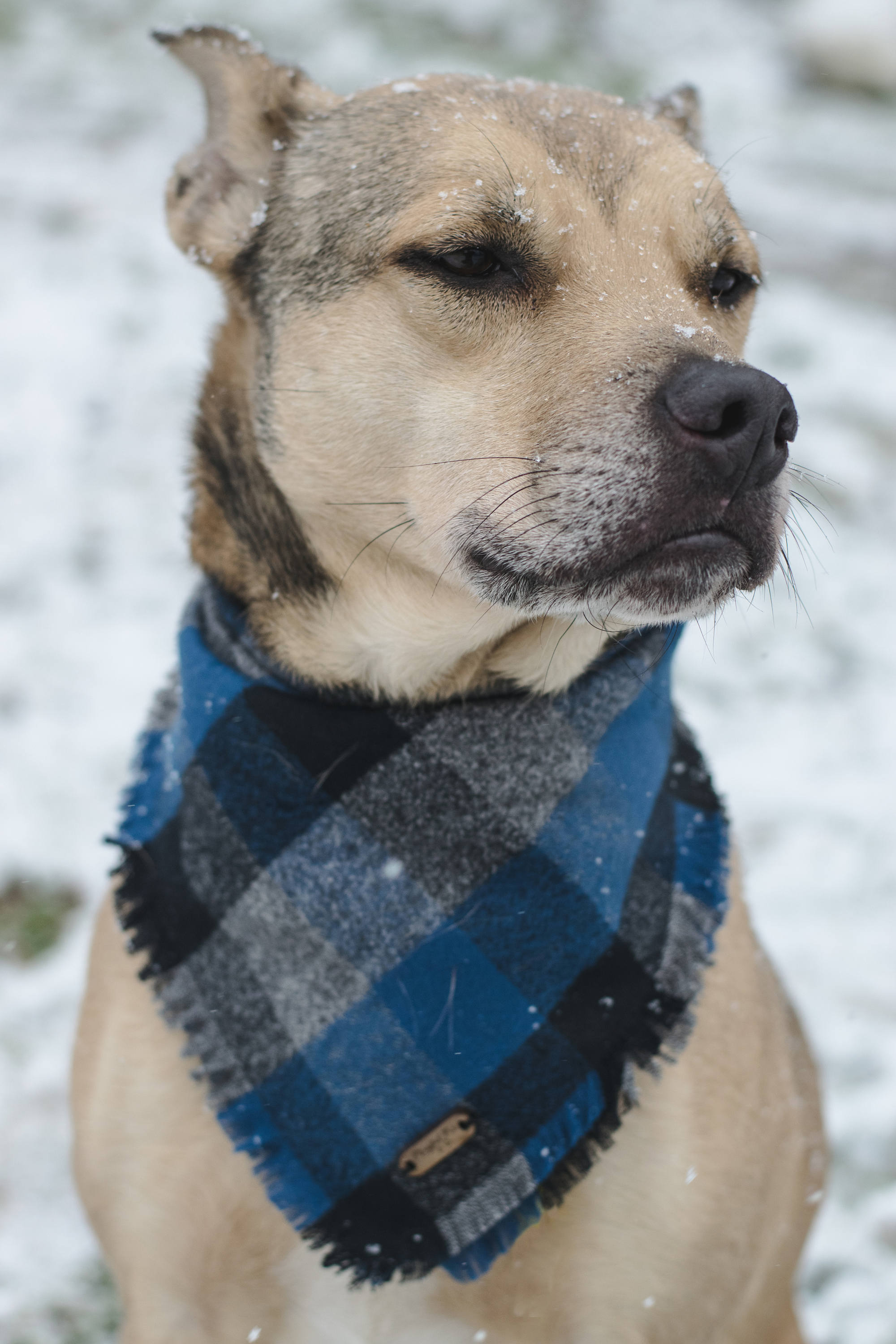 Blue Dog Scarf