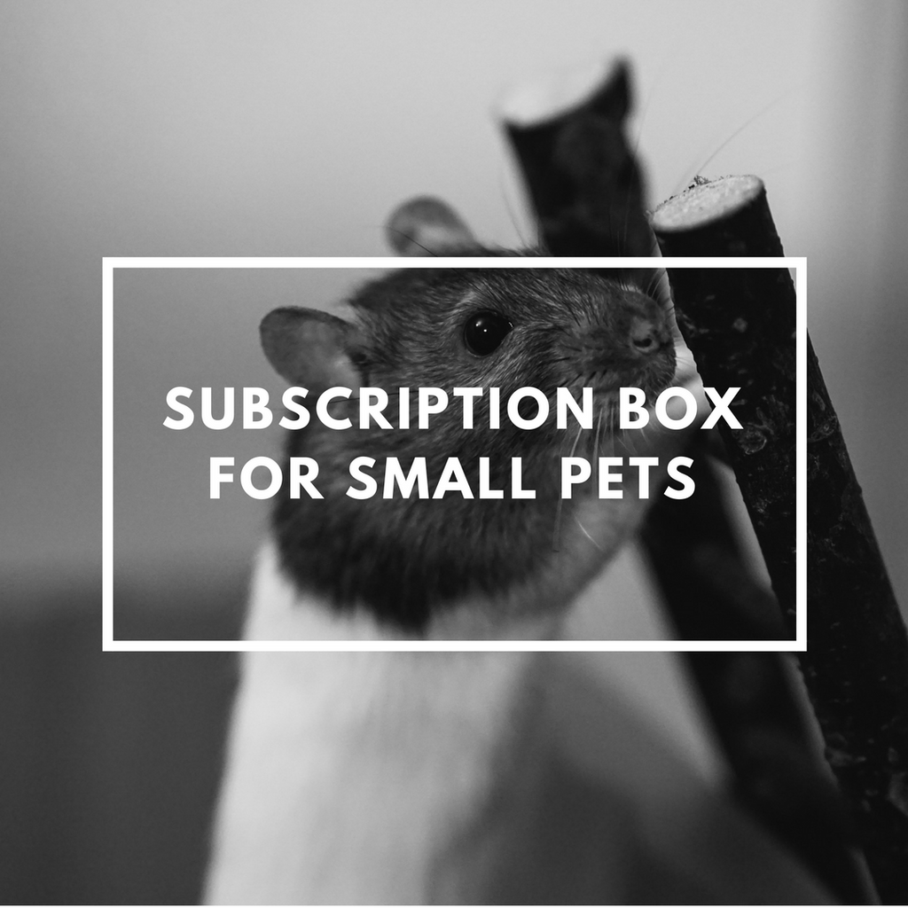 Small Pet Subscription Box