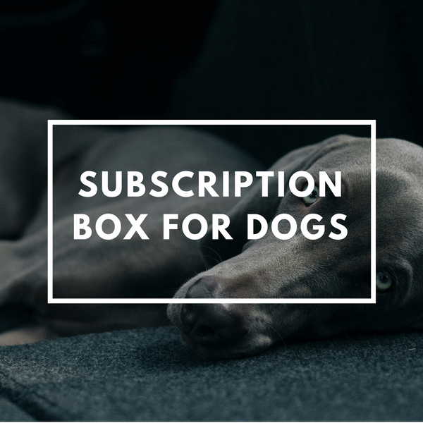 Dog Subscription Box