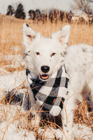 White Buffalo Check Tie-On Pet Bandana
