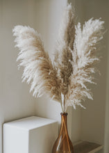 Load image into Gallery viewer, pampas grass (medium bundle)