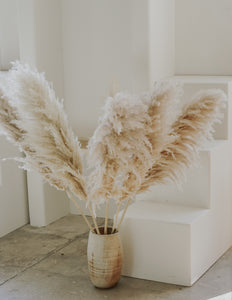 pampas grass (large bundle)