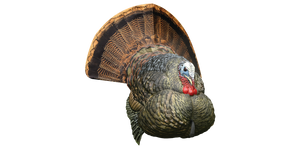 Zink Avian X Strutter Turkey decoy LCD