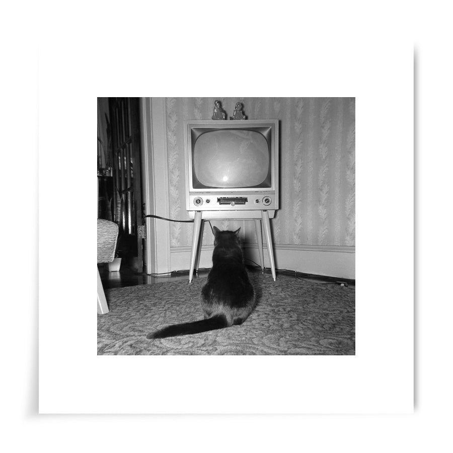 Cat Watching TV 1950s - 8x8 Print