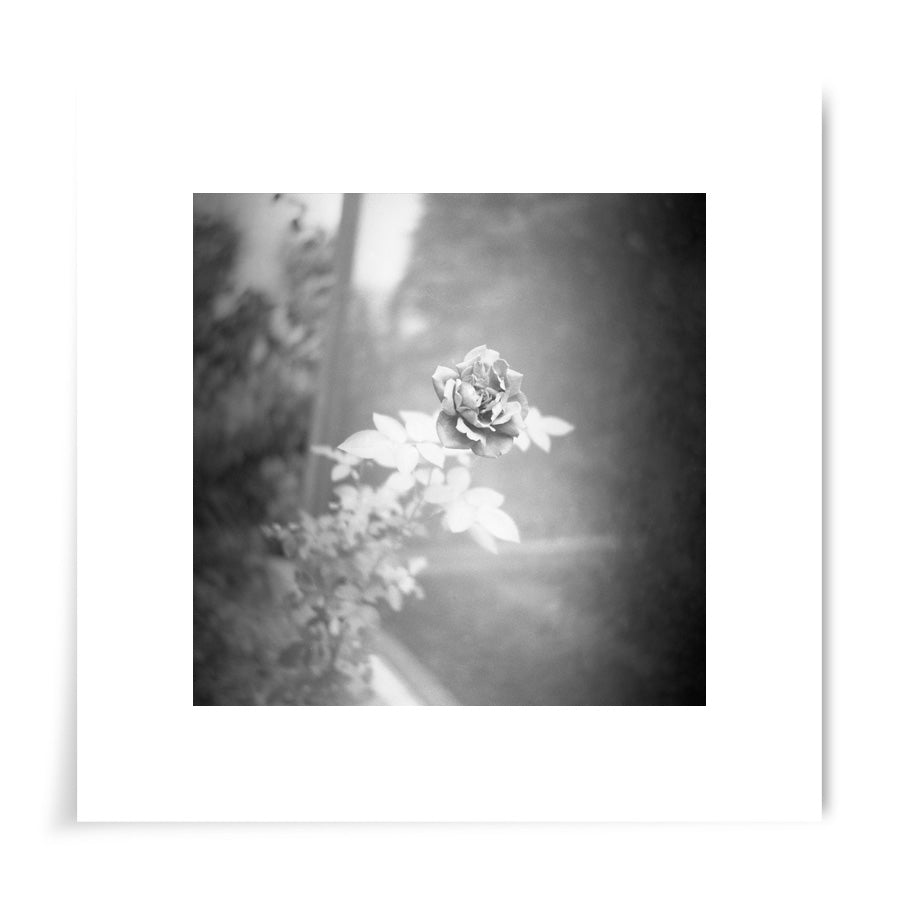 Monochrome Rose - 8x8 Print