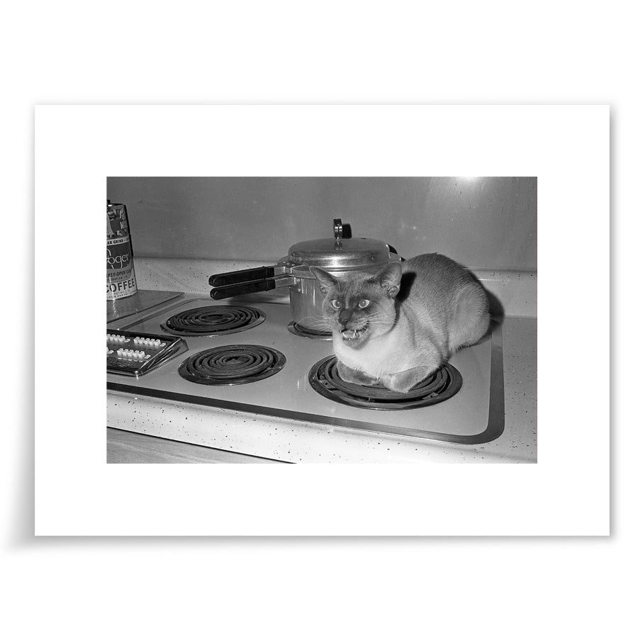 Siamese Cat on Stove - 6x9 Print