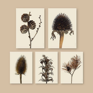 Dried Purple Coneflower 30x40cm Print