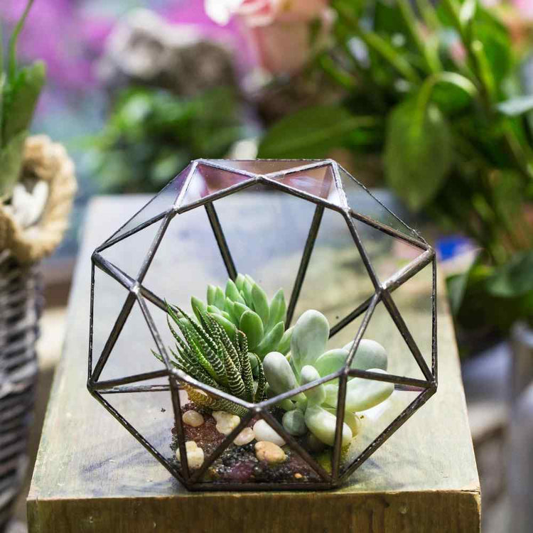 Glass Diamond Terrarium