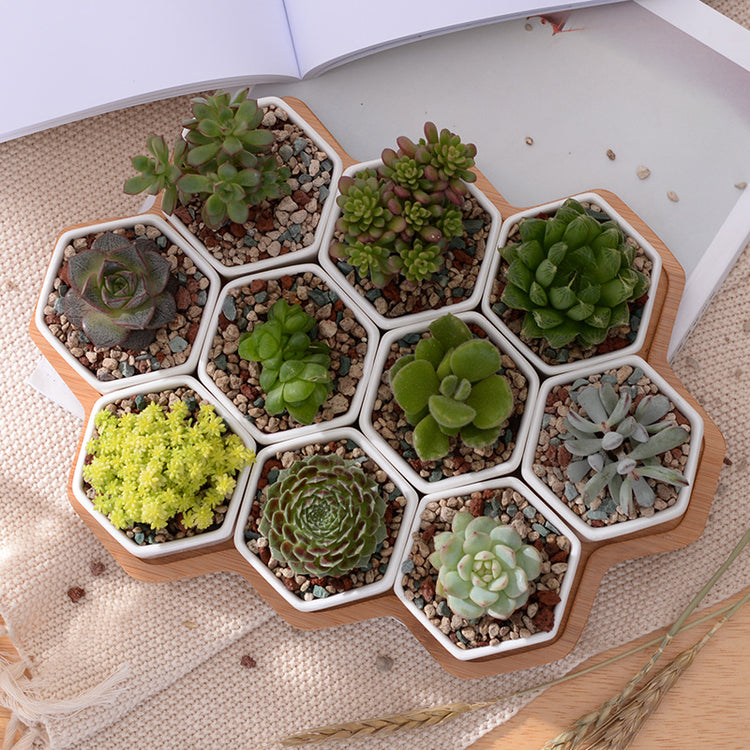 Bamboo Honeycomb Planter Set