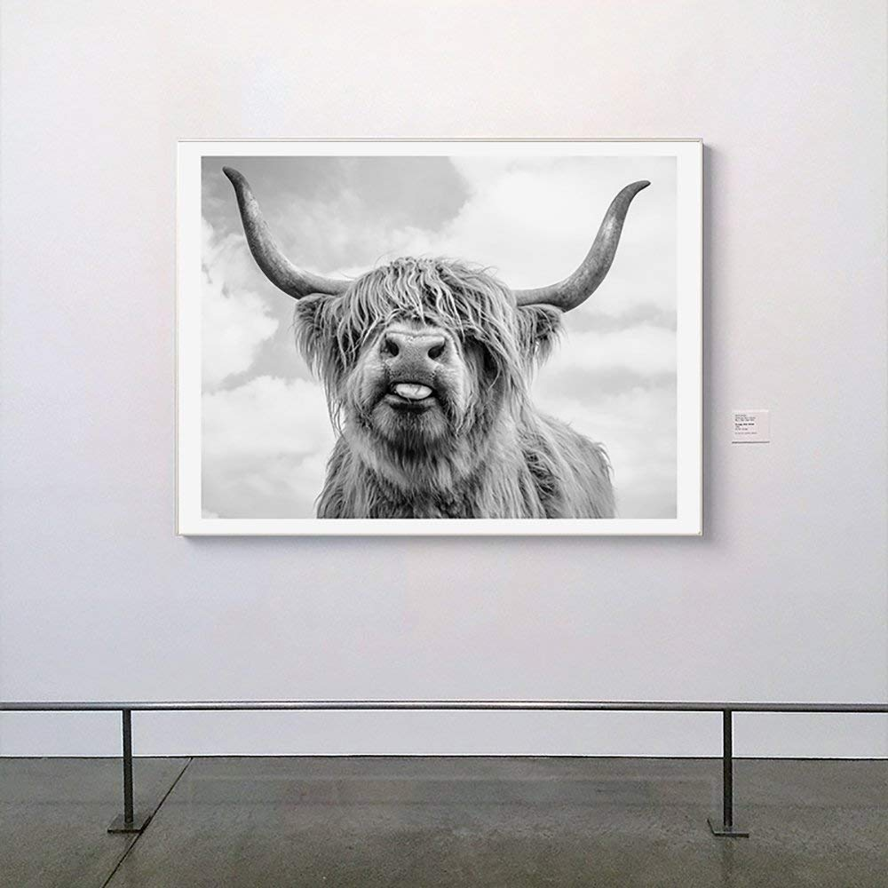 The Highland Cow Canvas Collection