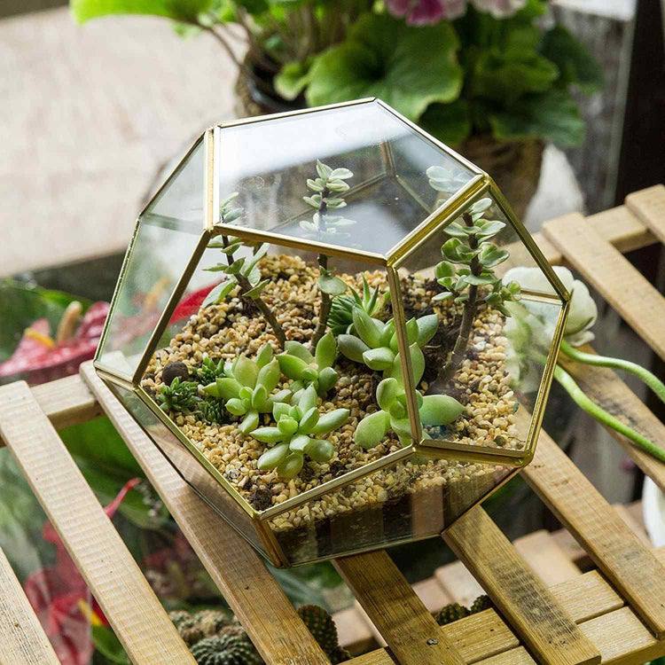 Glass Hexagonal Terrarium