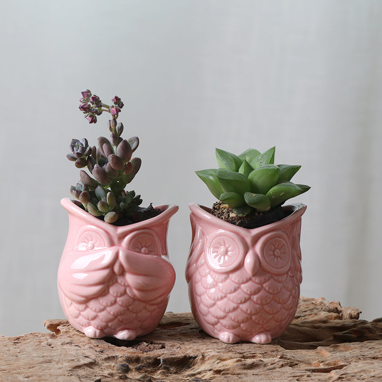 Wise Owl Planter Set