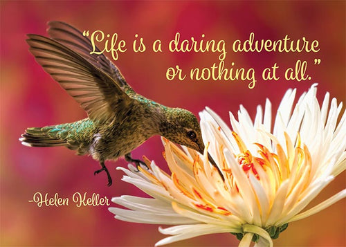 Life is a Daring Adventure Hummingbird Birthday Card