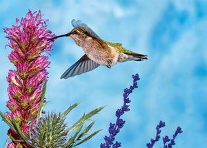 Hummingbird on Blue Blank Card
