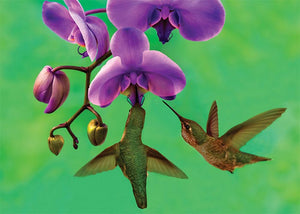 Hummingbird on Green Blank Card