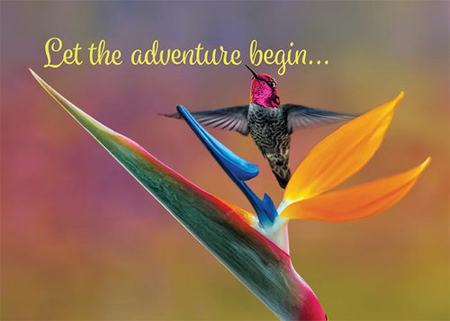 Let the Adventure Begin Hummingbird Congratulations Card