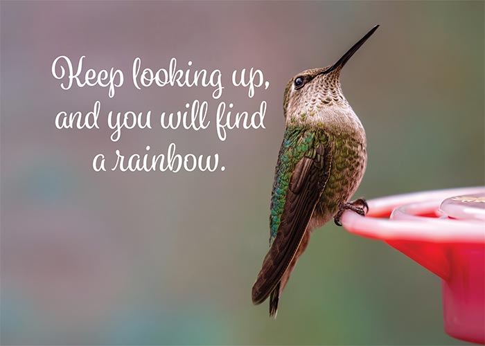 Keep Looking Up Hummingbird Card