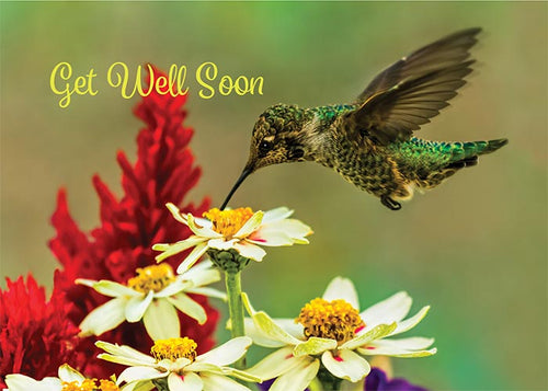 Get Well Soon Hummingbird Get Well Card