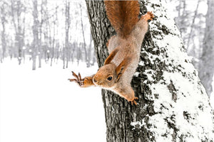 Squirrel Wave