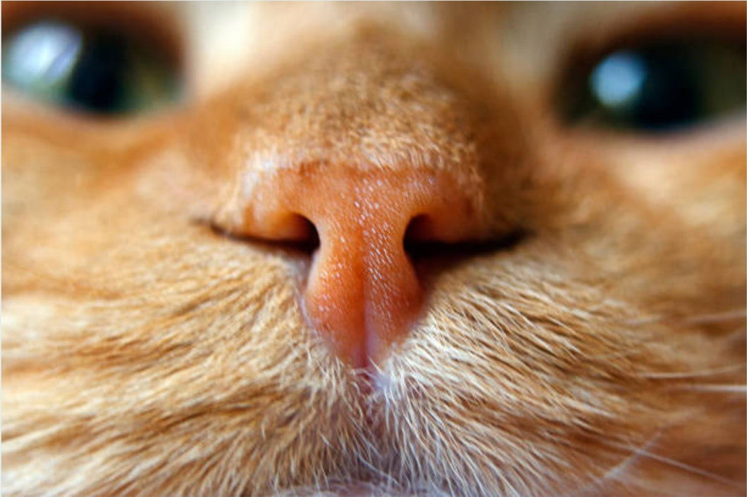Close Up Cat