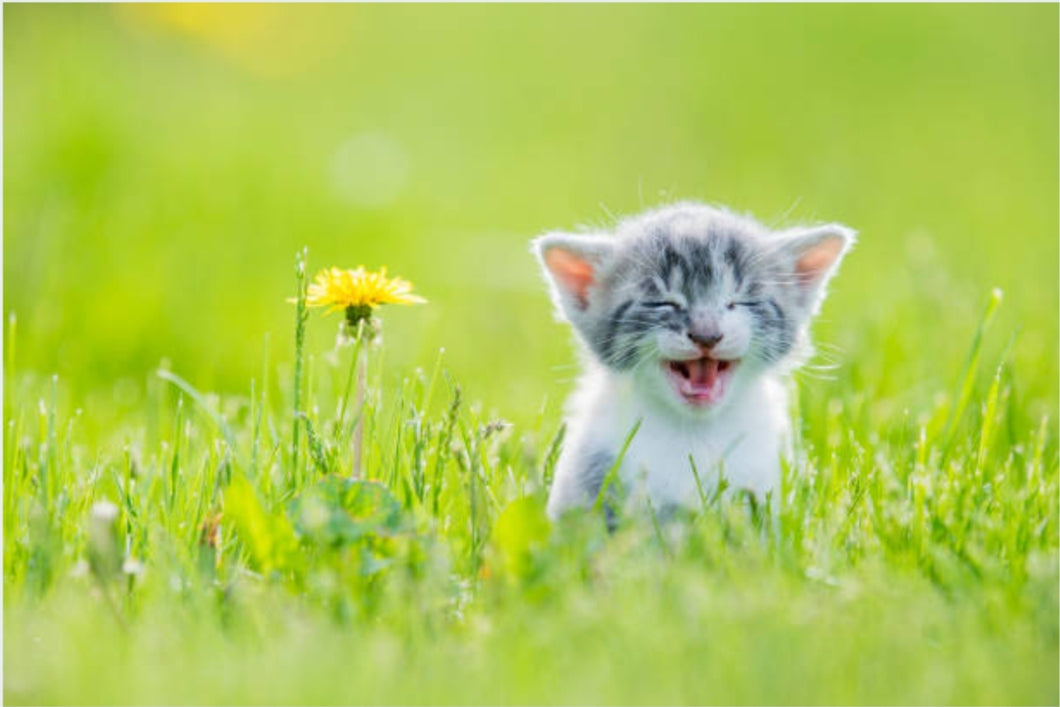 Kitten Loves Flower