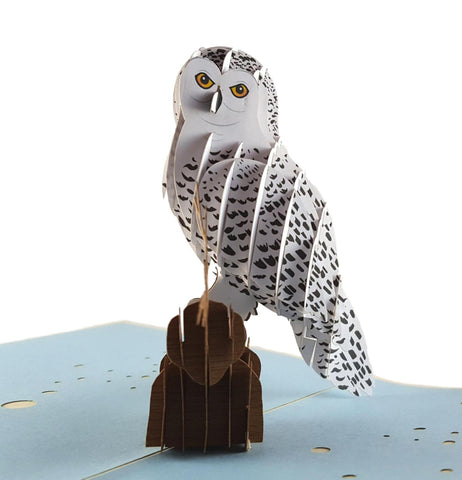 Owl 3D Pop Up Greeting Card 1
