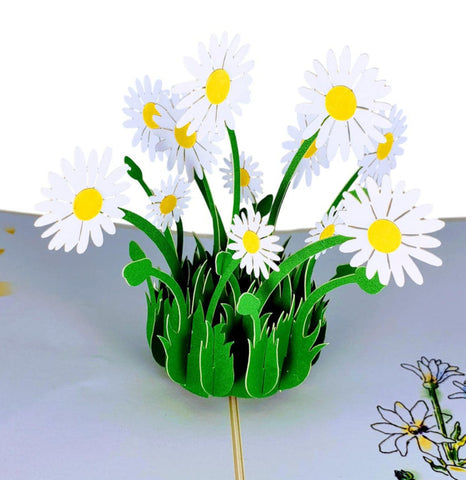 White Daisies 3D Pop Up Greeting Card 1 front