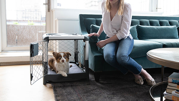 5 tips to get started with crate training