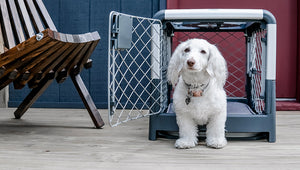 Six reasons you should crate train your dog.