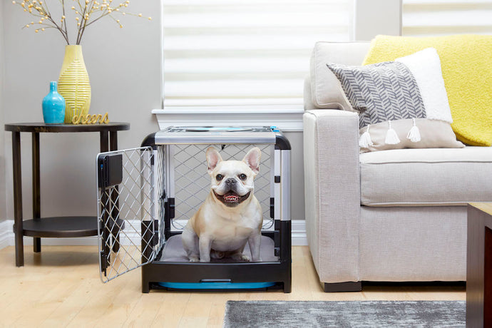 How to Choose, Use and Maintain a Dog Crate