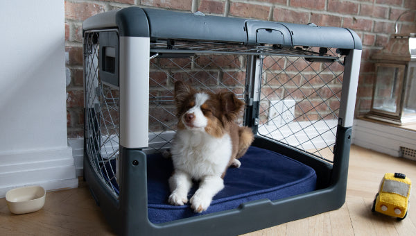 Cute puppy in crate that looks like a comfy den