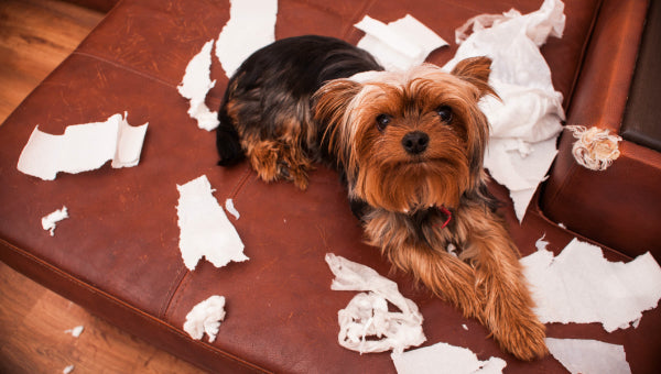 Dog laying on torn up paper causing mischief