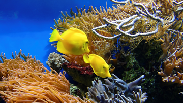 Coral Reefs: Where are They Found, How are They Formed, and What Can we do to Protect Them?