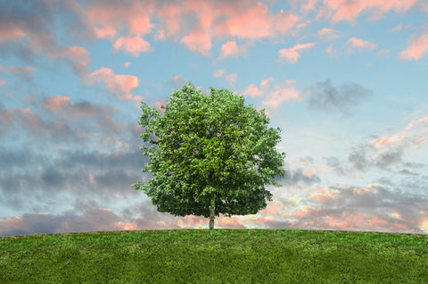 Embalming vs Natural Burial - Green Burial - Eco-Friendly - Embalming Alternatives