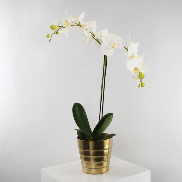 Orchid Plant | Brass Pot