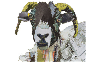 PCK0114 SWALEDALE SHEEP - Hand Signed Giclée Print