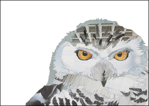 PCK0119 SNOWY OWL - Hand Signed Giclée Print