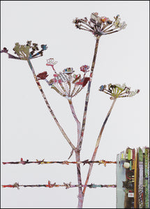 PCKHF10 COW PARSLEY - Hand Signed Giclée Print