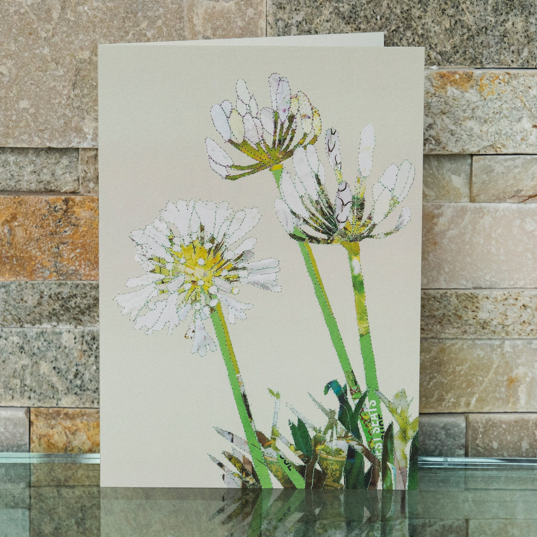 CKHF05B 'Agapanthus' Greetings Card (packed in 6's)