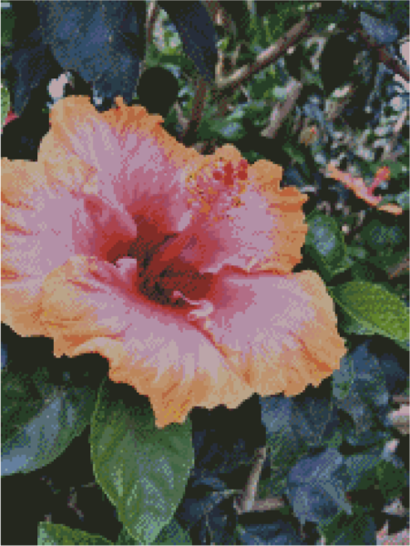 Customer Design - Hibiscus Sunset 1C
